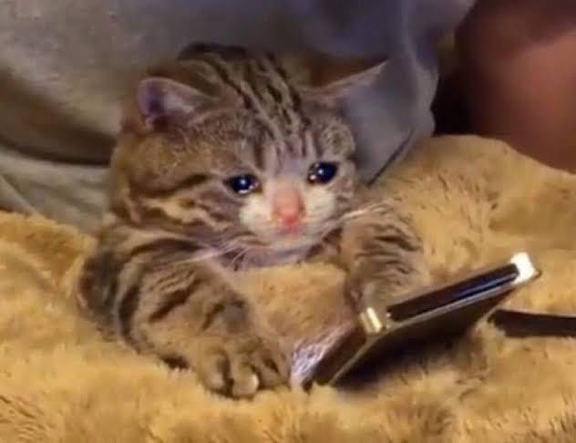 """Resultado de imagen de gato llorando"""""""