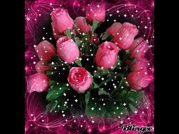 beautiful rose image profile picture