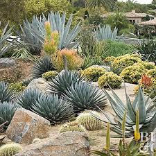how to start a cactus garden better