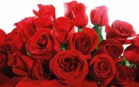 love wallpaper rose flowers wallpapers