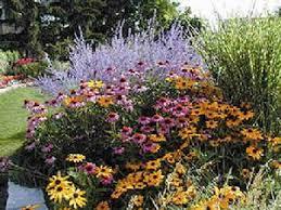 perennials for the sun in omaha ne