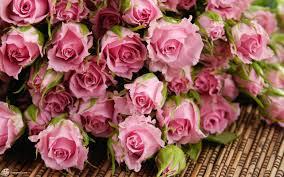 صور ورد غلاف اجمل الورود الطبيعية بالصور حلوه خيال