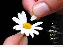 flowers quotes hd