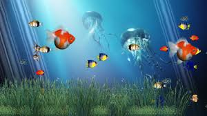 moving fish wallpaper hd wallpapers