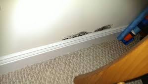 mold behind the drywall drywall