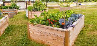 raised bed gardening tlc garden centers