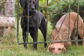 How To Prevent Dog Escapes And Find A Lost Dog If He Does Get Out