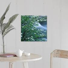 Shop California Pacific Dogwood Flowers Blooming On A Tree Close Up Canvas Wall Art Overstock 31190889