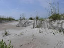 Beach Sand Dune Fence Photograph By Bea Godwin