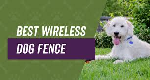 Best Wireless Dog Fence Reviews Guide Top 4 Picks 2020