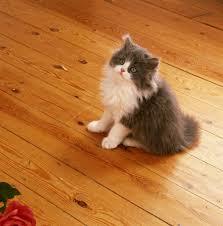 cat urine smell on hardwood floors