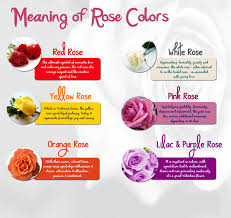 meaning of rose colors prospect