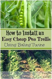 How To Install A Baling Twine Trellis For Peas Farm Fit Living