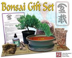 diy bonsai gift set 2 w 8 pot