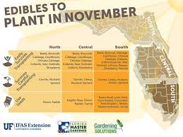 florida edible vegetables to plant in