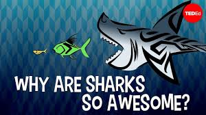 Why are sharks so awesome? - Tierney Thys - YouTube