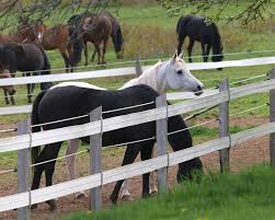 Finishing Your Fence Installing Tensioned Electric Fencing Horse Journals