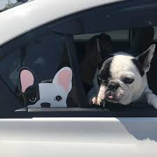 Frenchie Sticker Frenchiestore Black L Pied French Bulldog Car Dec