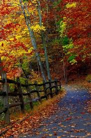 trees fence road falling leaves