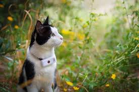 8 Best Cat Trackers Of 2020 We Tested Them All We Re All About Cats