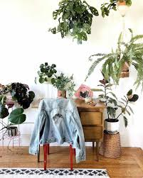the best insram accounts for houseplants