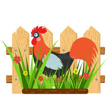 Beautiful Card With A Cartoon Rooster With Fence And Grass With Flowers Stock Vector Illustration Of Festival Chicken 85499709