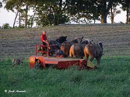 Amish Farmer, Lancaster PA USA