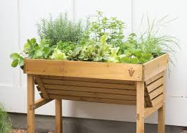 herb garden growing herbs gardener