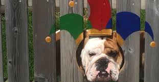 Dog Owners In Denmark Paint Fence To Give Their Pups Silly Costumes Travel Leisure Travel Leisure