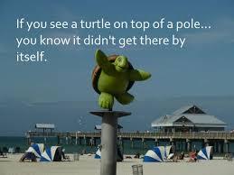 Turtle On Pole Deborah Tindle