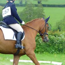 Abby Henry Eventing - Posts   Facebook