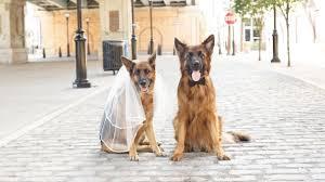 pet friendly honeymoon hotels