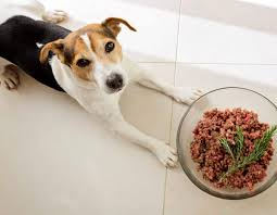homemade pup food in a snap mindful