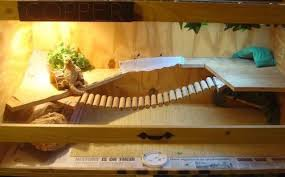 10 inspiring bearded dragon cage setup