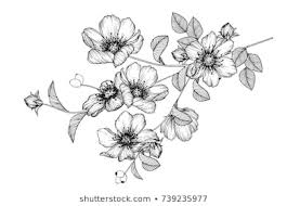 drawing flowers images stock photos