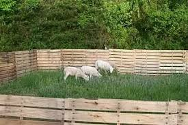 Pin By Melanie Watkins On Sydney S Own Little Board Sheep Fence Goat Shelter Pig Fence