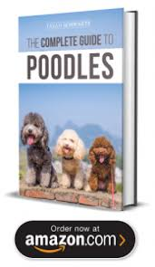 standard poodle puppies in