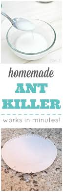 homemade ant works in minutes