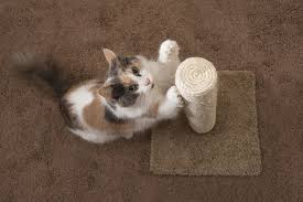 the 25 best cat scratching posts of