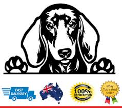 Dachshund Peeking Dog Car Decal Vinyl Sticker Sausage Dog Wiener Dog Decal Ebay