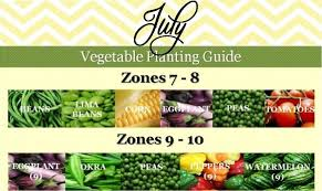 july vegetable planting guide