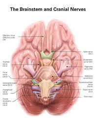 Medical Wall Decals Anatomy Charts Wallmonkeys Com