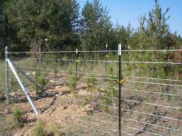 Field Fence And Hog Wire