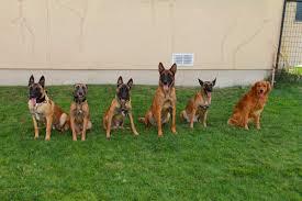 Dog Training Classes in San Antonio ...