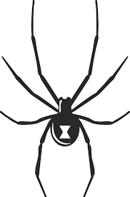 Black Widow Decal Sticker Wall Laptop Car D 4 Etsy