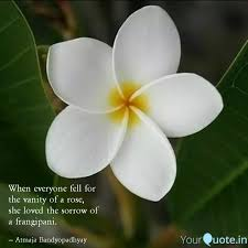 best frangipani quotes status shayari poetry thoughts yourquote
