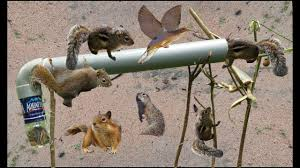 squirrel trap easy hole using pvc
