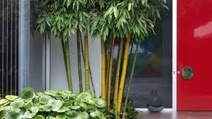 grow bamboo for small gardens pots