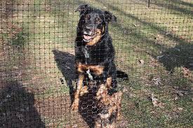 Dog Fence Rolls Dog Fence Pet Fence Dog Backyard
