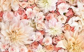 carnation dahlia earth pastel pink